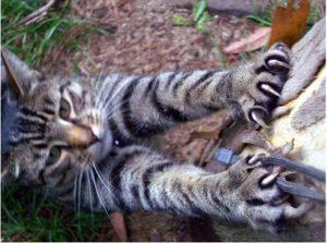 Un chat qui griffe