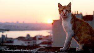 Photo d'un chat roux issue du film Kedi