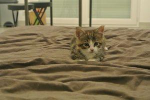 Un chaton sur un tapis
