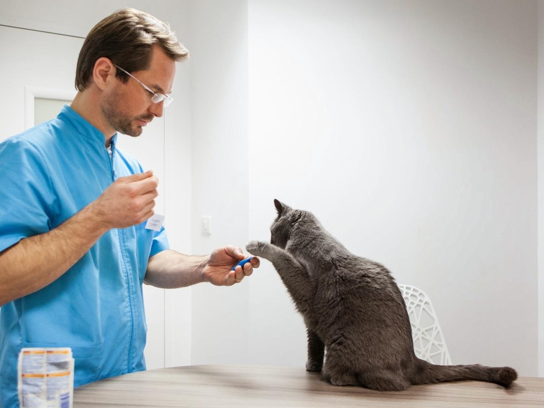 Le Dr Berg qui donne à manger à un chat