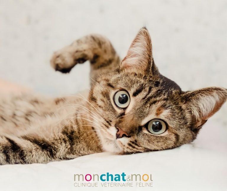Du nouveau pour traiter l'arthrose de mon chat